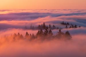 Fog Trees Forest Sunset