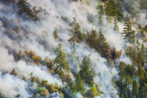 California Forest Fire