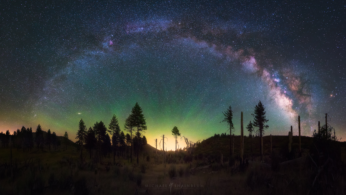 Forest Milky Way Night Sky Panorama