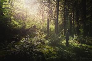 Rainforest Selfie Adventure Washington
