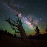 Milky Way Tree California