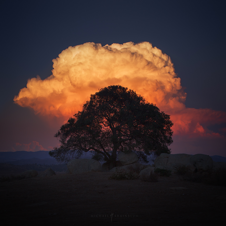 Large sunset cloud over a tree in San Diego.