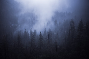 Foggy forest in Yosemite