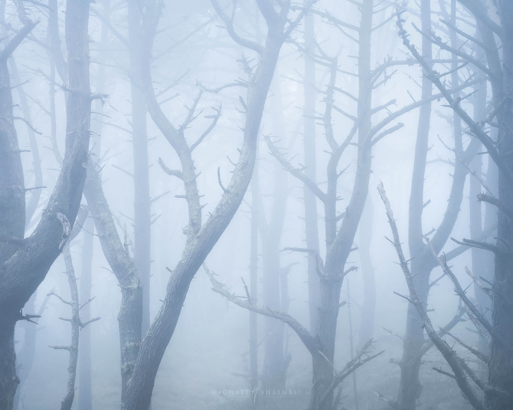 California fog forest photography