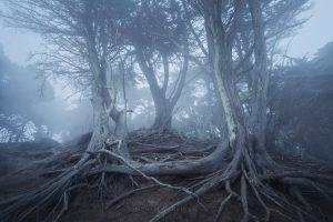san francisco landscape photography 2020