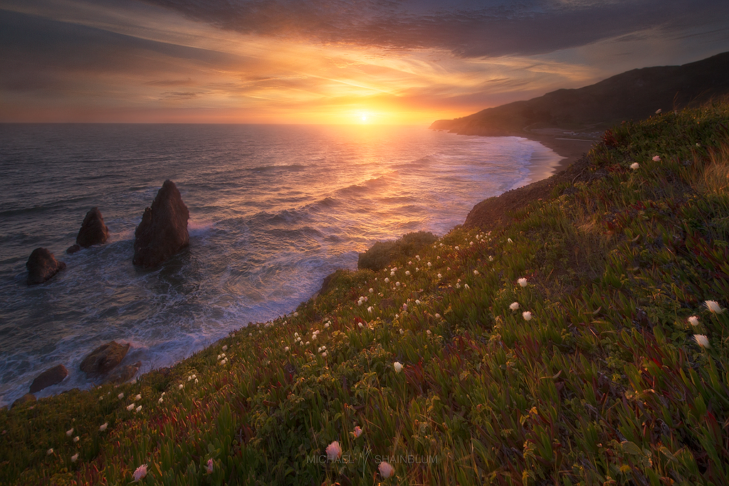 Rodeo Beach cliffs and flowers.