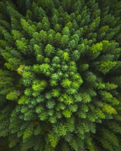 Green Forest Aerial Drone Photo