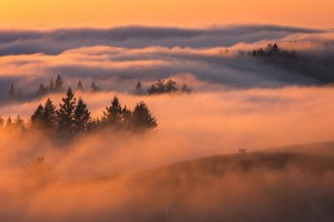Fog Friends Sunset San Francisco Forest