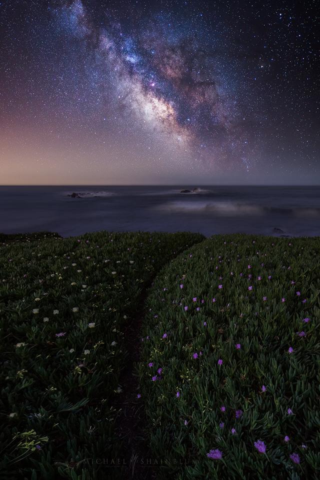 Flowers Milky Way Night Sky Ocean