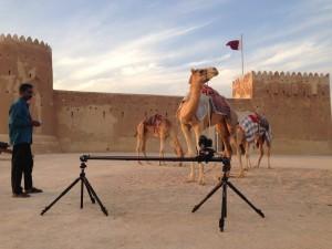 Camel Timelapse Travel