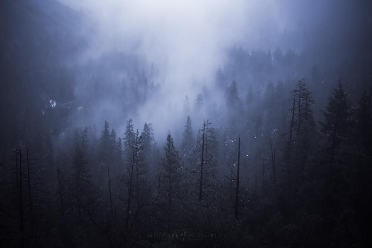 Foggy forest in Yosemite