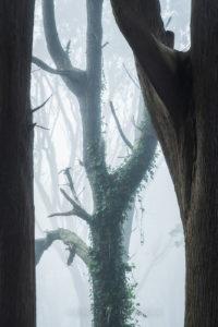 California fog forest photography