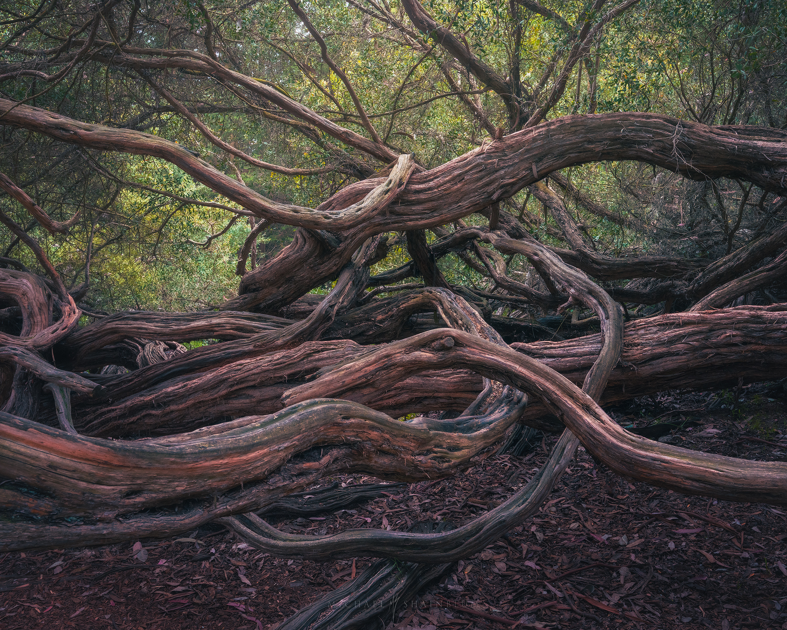 golden gate park, san francisco landscape photography.